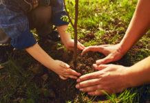 Niezbędne akcesoria do wydajnej pracy w sadzie