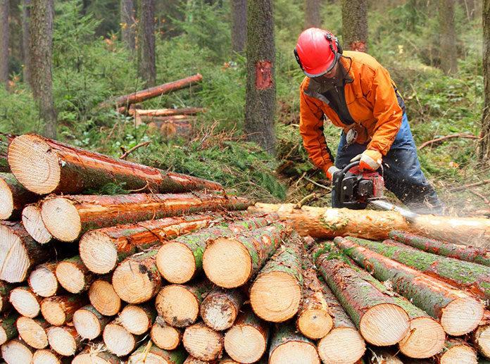 Wydajniejsza praca w drewnie z narzędziami Holzkraft!